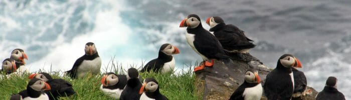 Puffins in Mykines by Countryside Alliance