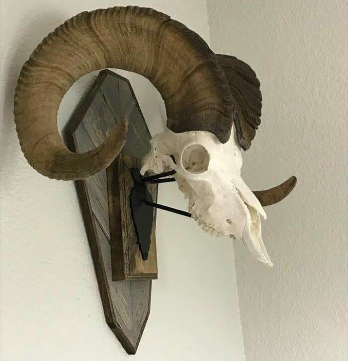 Rack Bracket European sheep mount