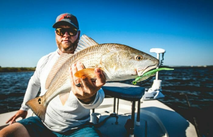 Creole Croaker represents one of the favorite meals of Gulf Coast seatrout and other inshore species.