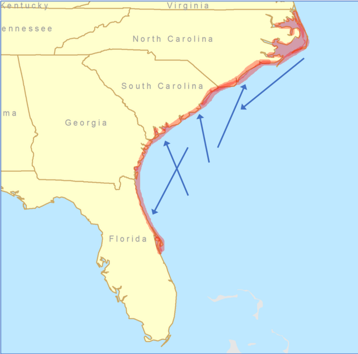 Southern flounder within the area in red migrate throughout the region (blue arrows) and all belong to one population.