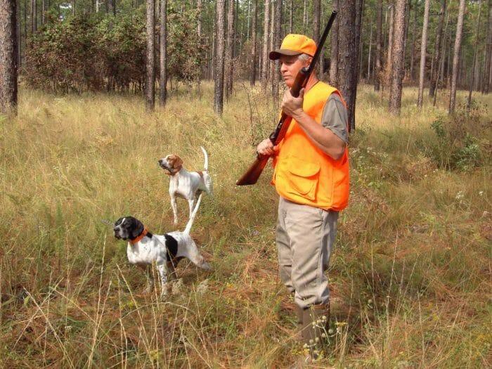 hunter_dogs_sporting_retrievers