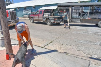 Texas Animal Freedom Fighters hog attack